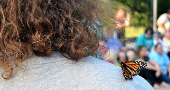 Butterfly release remembers Novinger, others