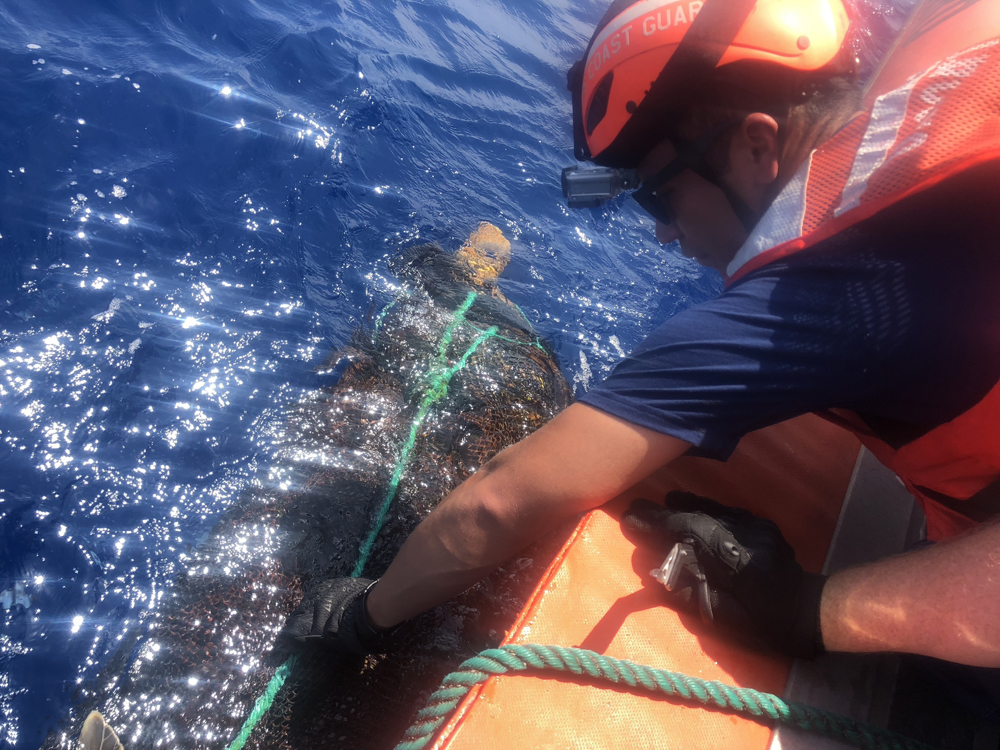 A crew member from Coast Guard Cutter Hamilton helps rescue an olive ridley sea turtle from abandoned fishing nets and line in the Eastern Pacific Ocean. The boat crew cut the turtle free and removed the debris from the ocean. (Photo/Coast Guard Ensign Kiana Kekoa)