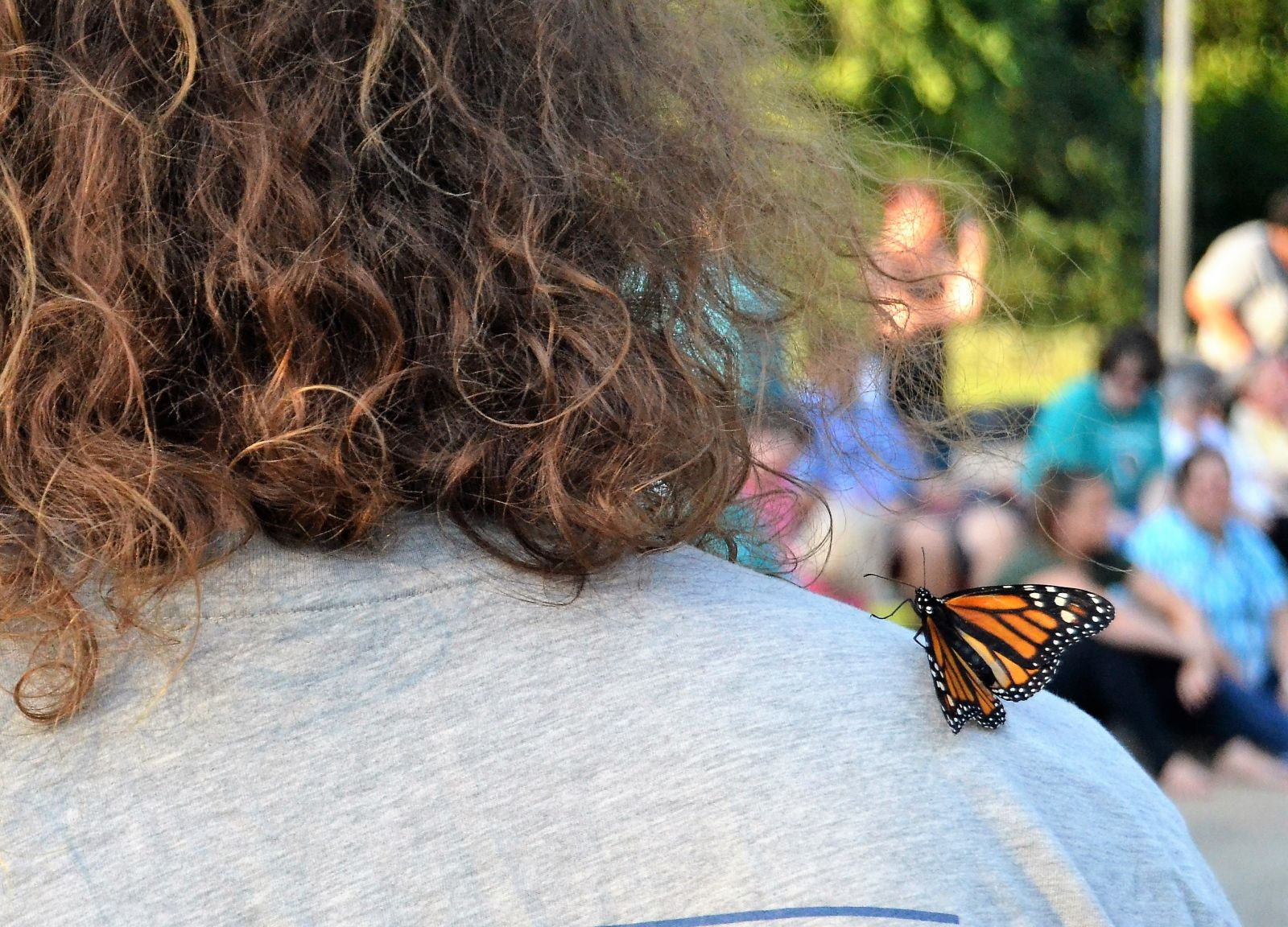 A butterfly alights on the shoulder of an attendee at Thursday's Cathy B. Novinger Butterfly Release for Ovarian Cancer at the Statehouse. (Photo/Travis Boland)